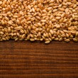 Wheat grains — Stock Photo