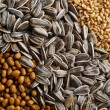 Grains — Stock Photo #30352313