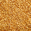 Wheat grains — Stock Photo #30765719