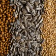 Grains — Stock Photo #31654915