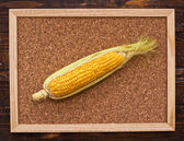 Ear of corn on bulletin board — Foto Stock