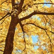 Tree branches in autumn sunlight — Foto de Stock