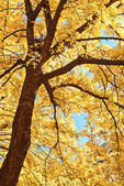 Tree branches in autumn sunlight — Stock Photo