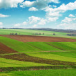 Arable land — Stock Photo #33525681