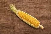 Ear of corn on sack texture — Foto Stock