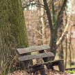 Bench in the park during winter season — Stock Photo