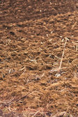 Plowed agriculture — Stock Photo