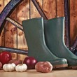 Stock Photo: Rubber boots and various vegetable