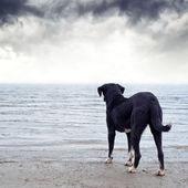 Dog afraid of the water — Foto de Stock