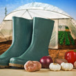 Rubber boots and various vegetable with greenhouse in background — Stock Photo