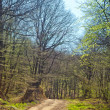 Rural road through forest — Stock Photo