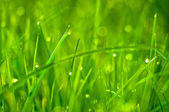 Fresh green grass as spring season background — Stock Photo
