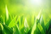 Fresh green grass as spring season background — Stock Photo