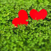 Red paper hearts in green clover — Stock Photo