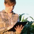 Woman agronomist using tablet computer in corn field — Stock Video #48800349
