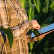 Woman agronomist using tablet computer in corn field — Stock Video #48800955