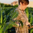 Woman agronomist using tablet computer in corn field — Stock Video #48801233