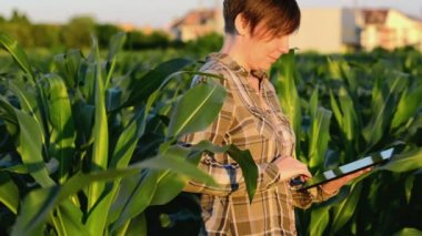 Woman agronomist using tablet computer in corn field — Stock Video
