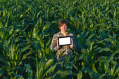 Agronomist with tablet computer in corn field — Stock Photo