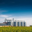 Grain Silos in Sunflower Field — Stock Photo #50051837