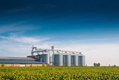 Grain Silos in Sunflower Field — Foto Stock