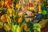 GMO science in corn field — Stock Photo
