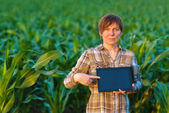 Agronomist with tablet computer in corn field — Stok fotoğraf