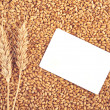 Wheat grains and ears as agricultural background — Stock Photo #51514929