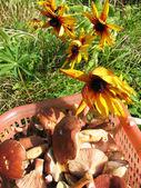 Autumn gifts: mushrooms and flowers Rudbeckia x hybrida — Stock Photo
