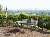 Vineyard in Troy (Troja) in the north of Prague, an observation deck — Stock Photo