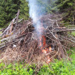 Bonfire on the forest edge — Stock Photo