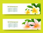 Banner con orquídeas, fondo floral vector — Vector de stock