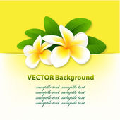 Banner with orchids, floral vector background — Stock Vector