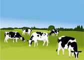 五头母牛 — 图库矢量图片