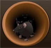 Rats — Stock Vector