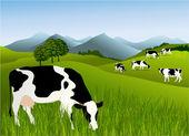 Vaches — Vecteur