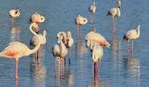 Flamingo pink — Stock Photo