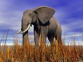 Olifant grijs — Stockfoto