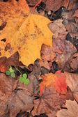 Autumn an leaf — Stockfoto