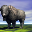 Bison — Stock Photo #24609543