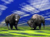 Bisons — Stock Photo