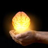 Brain in hand — Stock Photo