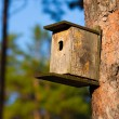 Stock Photo: Starling house in forest