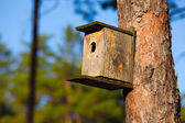 Starling house in forest — Stock Photo
