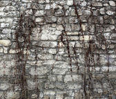 Ivy on ancient wall — Stock Photo