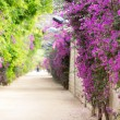 Alley with blooming flowers — Stock Photo