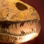 Teeth of dinosaur — Stock Photo