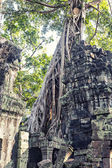 Ruins in tropical forest — Stock Photo