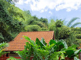 Roof of tropical house — Stock Photo