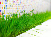 Green grass plant decorating — Stock fotografie